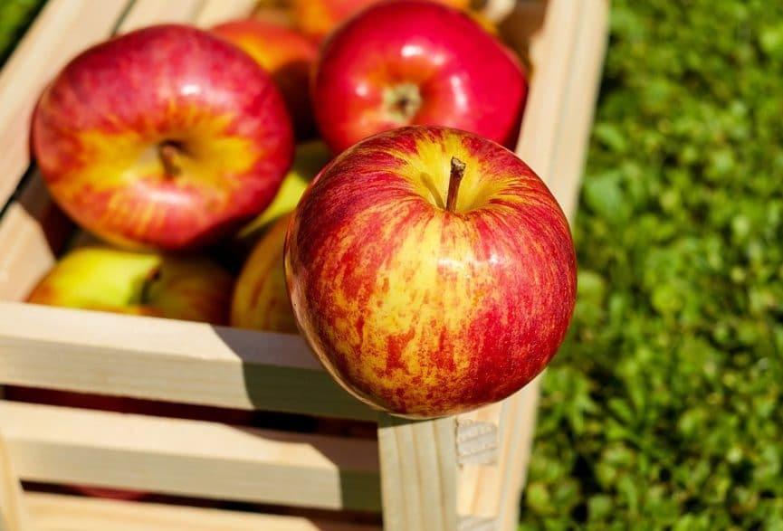 למה לאכול תפוח?