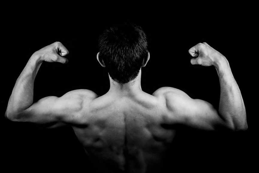איך שריר נבנה במהלך אימון?